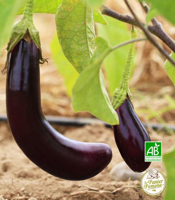 Acheter des fruits et legumes bio en circuit court sur le bassin d'arcachon et bordeaux