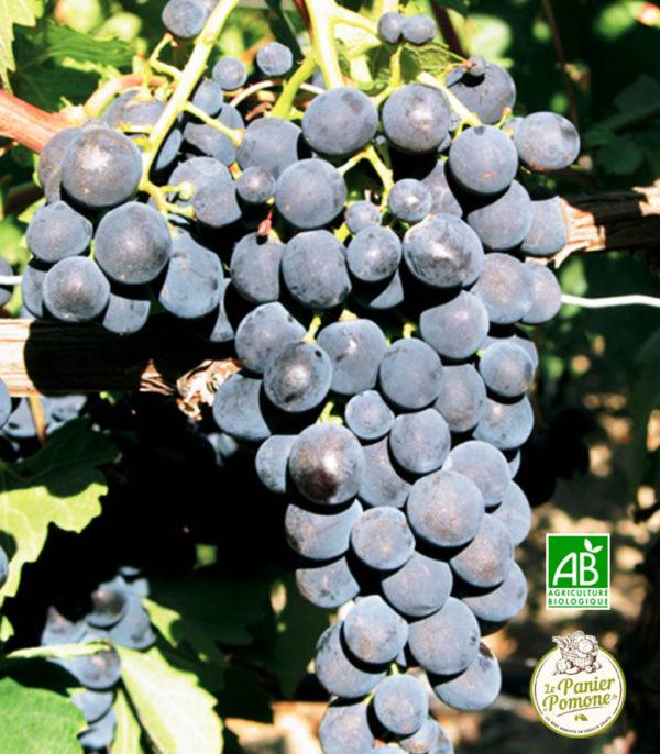 Le Panier de Pomone, livraison de raisin et de fruits et legumes bio en circuit court sur le bassin d'arcachon et bordeaux