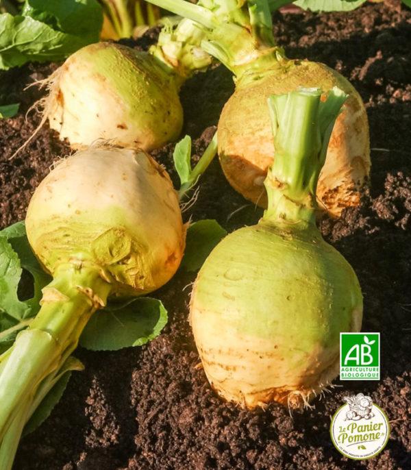Le Panier de Pomone, livraison de navet bio et fruits et legumes bio en circuit court à La Teste, Arcachon et Bordeaux